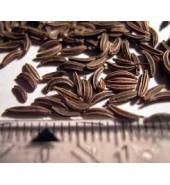 Keraviye   200 gr  ( firenk kimyonu )